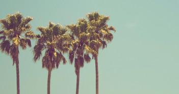 Palmen im Urlaub